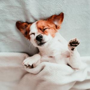 Hundekosmetik LUMPI
